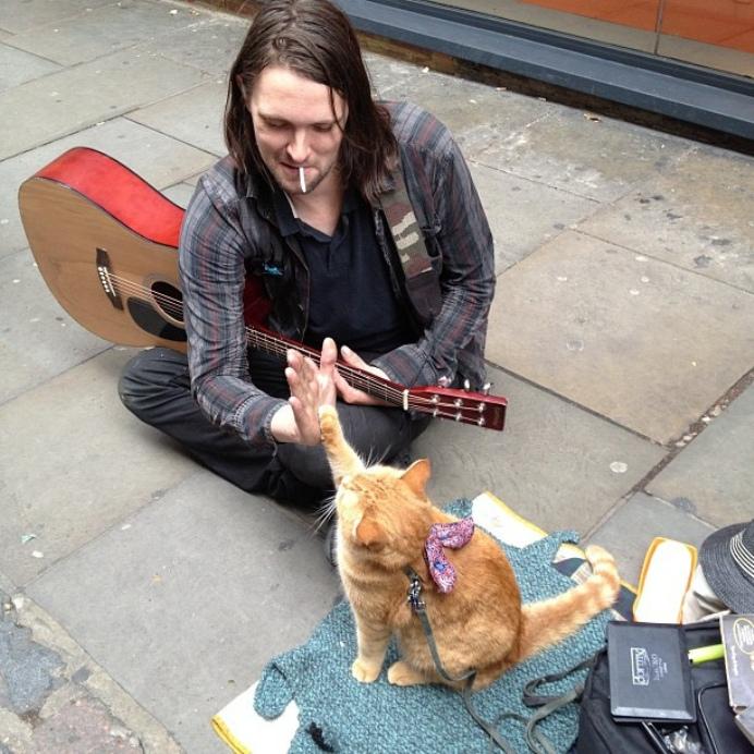 Madly уличный кот по имени боб 6 раунд